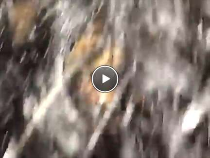 women pregnancy videos video